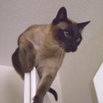 Billy klettert gerne oben auf dem Türrahmen