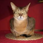 Seine Majestät auf dem Esstisch