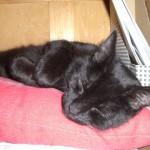 Maja schläft im Regal.