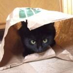 Katze in Tüte